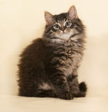 Fluffy small striped kitten sitting on yellow Royalty Free Stock Photos