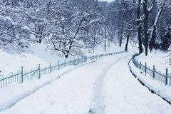 Fluffy snow on trees and pathway Stock Photography