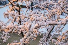 Fluffy snow on the trees Stock Photos