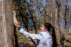 Fluffy squirrel held by claws on a tree and eating nuts from young girl hand in a resort park, sunny day, the city of Yessentuki, stock photos