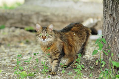 Fluffy  stray cat Stock Photo
