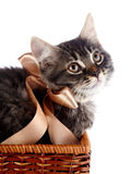 Fluffy striped cat with a bow in a wattled basket. Royalty Free Stock Photography