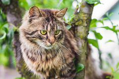 Fluffy striped cat on a tree in the middle of a green leaf. The cat climbs the tree_. Fluffy striped cat on a tree in the middle of a green leaf. The cat climbs stock photo