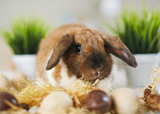 Fluffy symbol of Easter Stock Photos