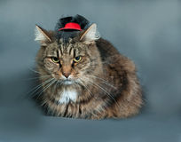 Fluffy tabby cat in black hat lies on gray Royalty Free Stock Photo