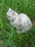 Fluffy tabby cat sitting in green grass Stock Photo