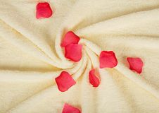 Fluffy a towel with petals of roses Royalty Free Stock Images