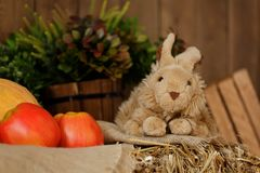 Fluffy toy bunny Royalty Free Stock Image