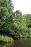 Fluffy trees and Iva`s bushes grow on the bank of the small small river. Summer sunny day on the river bank. Nature. Russia stock image