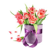 Fluffy tulips in violet vase Stock Photography