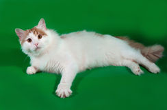 Fluffy white cat with red spots lying on green Royalty Free Stock Photos