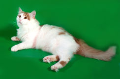 Fluffy white cat with red spots lying on green Stock Photo