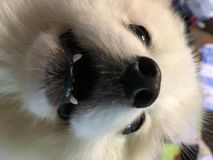 Fluffy white cloud friend stock photos