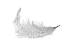 Fluffy white feather Royalty Free Stock Photography