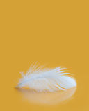 Fluffy white feather texture macro view. Luxury softness concept. Bird plumage feathering on yellow background. Shallow. Depth of field, soft focus. Copy space Stock Images