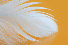 Fluffy white feather texture macro view. Luxury softness concept. Bird plumage feathering on yellow background. Shallow. Depth of field, soft focus Stock Image