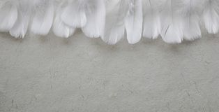 Angelic Row of White feather forming headers royalty free stock photos