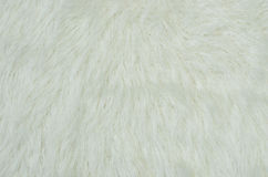 Fluffy white fur. Royalty Free Stock Images
