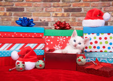 Fluffy white kitten in christmas presents royalty free stock photo