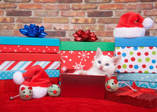 Fluffy white kitten in christmas presents stock photography