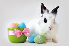 Fluffy white rabbit with Easter eggs isolated on grey background Stock Photo