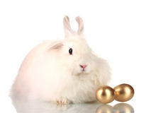 Fluffy white rabbit with golden eggs Royalty Free Stock Photo