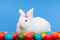 Fluffy white rabbit with pink bow guarding colorful eggs stock images