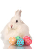 Fluffy white rabbit wiht eggs Royalty Free Stock Images