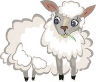 Fluffy white sheep Stock Images
