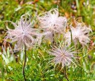 Fluffy wild flowers Stock Photos