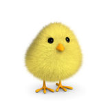 Fluffy Yellow Chick Royalty Free Stock Image