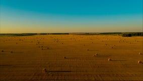 Flug über dem Feld nach Ernte für den Winter für Vieh stock video