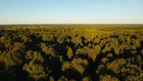 Flug über dem grünen Wald stock video