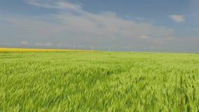 Flug über dem grünen Wheatfield zu den Windkraftanlagen am horisont wickeln Schlaggrünspitzen stock video footage