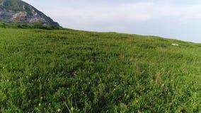 Flug über dem Gras zum zerbrochenen Berg stock footage