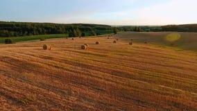 Flug über dem Weizenfeld und den Garben des Heus im Sonnenuntergang stock video
