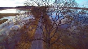 Flug über den Bäumen stock video