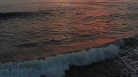 Flug über den Surfern, die Meereswogen bei Sonnenuntergang surfen Überraschender Sonnenuntergangluftmeerblick Spitze schoss von s stock footage