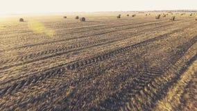 Flug über einem Feld mit runden Nasen des Strohs stock video