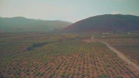 Flug über Hochlandweinberg in Andalusien, Spanien stock video