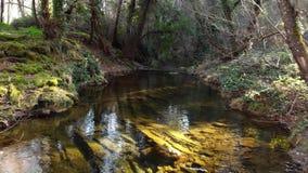 Flug ?ber Huernar-Fluss in Cazalla de la Sierra Wald am Sonnenuntergang stock video footage