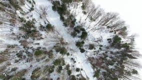 Flug über Oberteilen Bäumen ohne Blätter, Kiefern, Fichten und Tannen stock footage