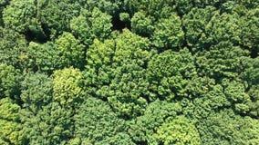 Flug über Wald stock video footage
