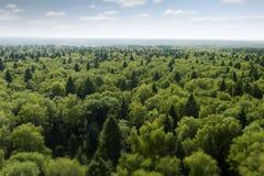 Flug über Wald Lizenzfreies Stockfoto