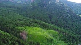 Flug über Wald in den Bergen stock footage