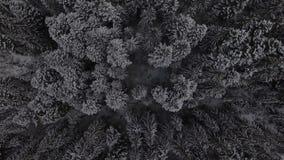 Flug über Winterwald auf der Nord-, von der Luftdraufsicht stock video footage