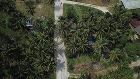Flug ?ber der Stra?e im Dschungel auf der Insel von Koh Phangan stock video