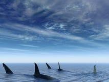 Flug der Haifische Stockbild