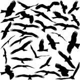 Flug der schwarzen Vögel auf einem weißen Hintergrund Schwarzer Drachen Stockfoto
