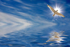 Flug der Seele Stockbilder
